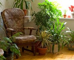 Interior: house plants edition