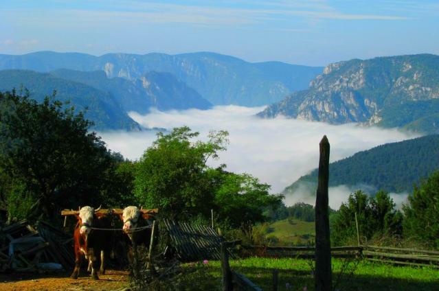 serbian-travel-information-jagostica-village
