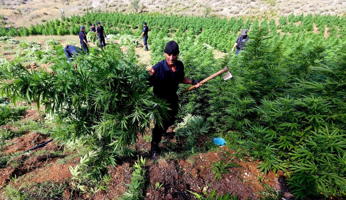 An Albanian War on Drugs